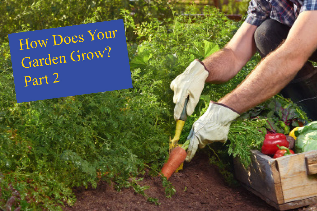 How Does Your Garden Grow Part 2